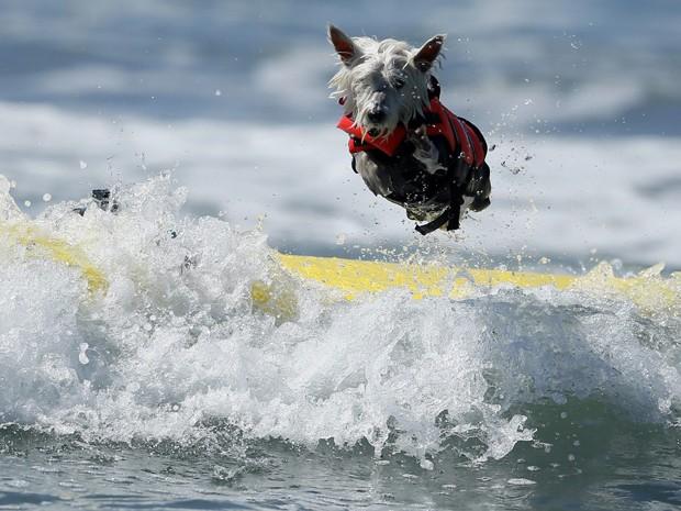 Cão salta da prancha durante campeonato de surfe nos EUA neste domingo (29) (Foto: Lucy Nicholson/Reuters)