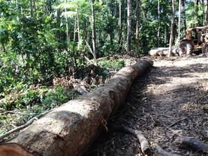 Tora que seria carregada da Flona de Altamira, no sudoeste paraense. (Foto: Divulgação/Ibama)