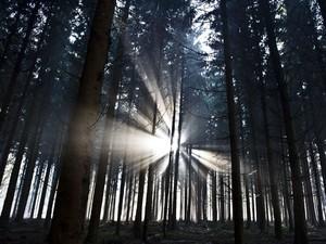 Raios de sol aparecem no começo da manhã em floresta perto de Weilburg, centro da Alemanha. (Foto: Nicolas Armer/AFP)