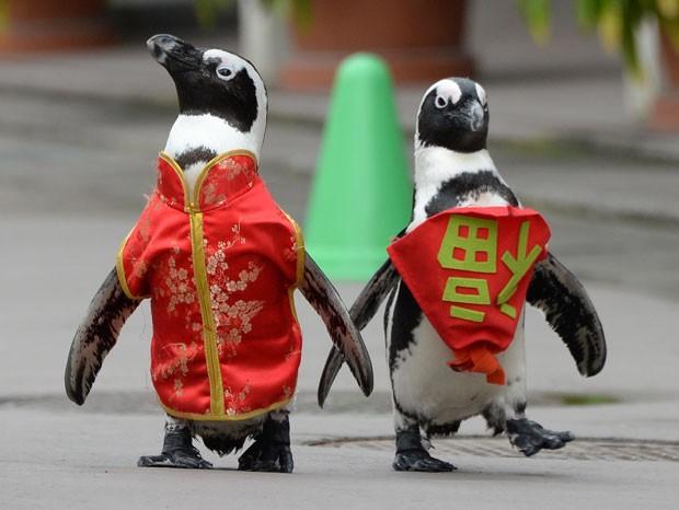 Pinguins são flagrados vestindo roupas tradicionais chinesas em uma caminhada de celebração neste domingo (25) em Tóquio (Foto: Toru Yamanaka/AFP)