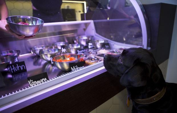 Restaurante em Berlim é exclusivo para animais de estimação (Foto: David Gannon/AFP)