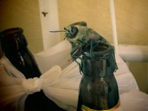 Besou faz 'ninho' perto de vazo de órquidea e 'visita' garrafa de cerveja em Piracicaba (Foto: Rosemeire Domarco)