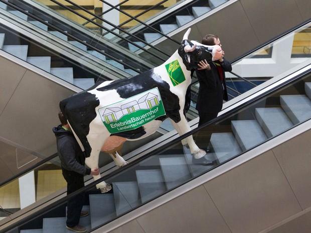 Funcionários sobem escada-rolante com uma vaca decorativa durante os preparativos para a Feira Verde Internacional de alimentos, agricultura e horticultura em Berlim, Alemanha. Neste ano, o país parceiro do evento é a Estônia. (Foto: Thomas Peter/Reuters)