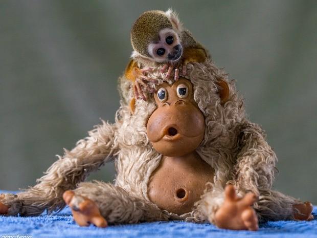 Campanha quer incentivar a doação de bichos de pelúcia a animais de verdade (Foto: Diogo Lagroteria/ Ibama)