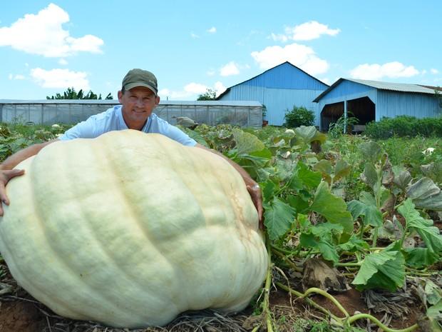 Agricultor apostou que conseguiria produzir abóbora de mais de 200 quilos (Foto: Antonio Luiz Theisen/Arquivo pessoal)