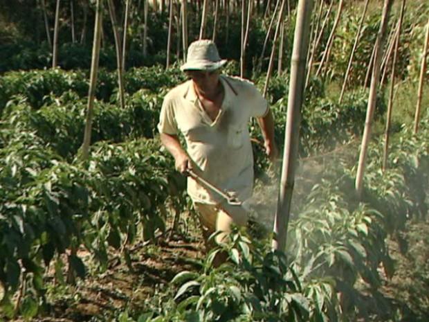 Agricultor em plantação no interior do Brasil (Foto: AFP)