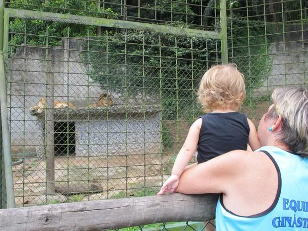 Visitantes observam os leões, em São Vicente (Foto: Mariane Rossi/G1)