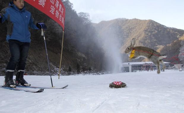 Coelho teria perdido por preferir dar pulos e não seguir as instruções do dono (Foto: AFP)
