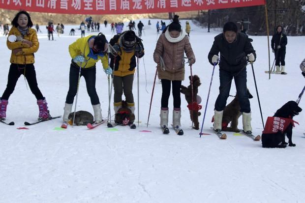 Chineses participaram de corrida de esqui voltada para animais domésticos (Foto: AFP)