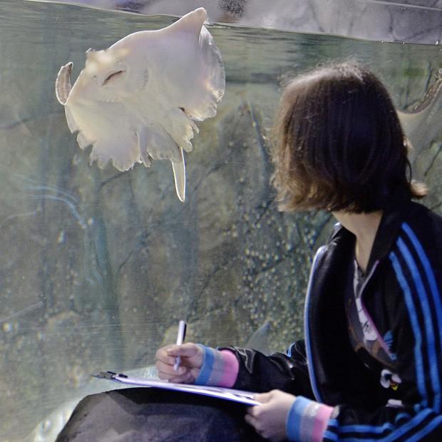 Estudante analisa arraia no aquário da Alemanha (Foto: Martin Meissner/AP)
