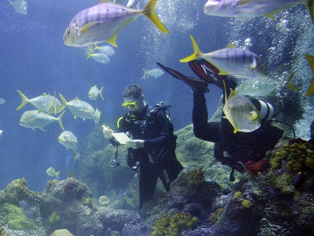 Mergulhadores fazem a contagem dos peixes no aquário de Oberhausen (Foto: Martin Meissner/AP)