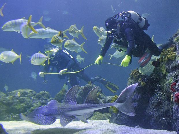 Pesquisador mede um dos peixe do aquário (Foto: Martin Meissner/AP)