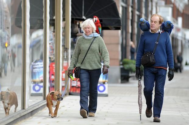 Casal passeando com cachorro e três araras foi flagrado em Londres, na Inglaterra (Foto: Frank Doran/REX)