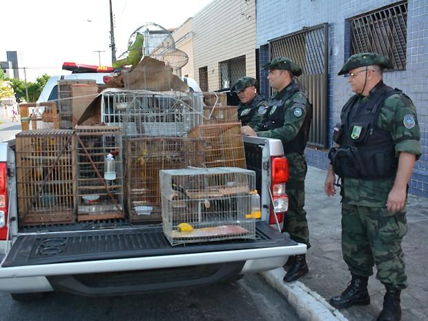Aves silvestres estavam sendo criadas irregularmente (Foto: Walter Paparazzo/G1)