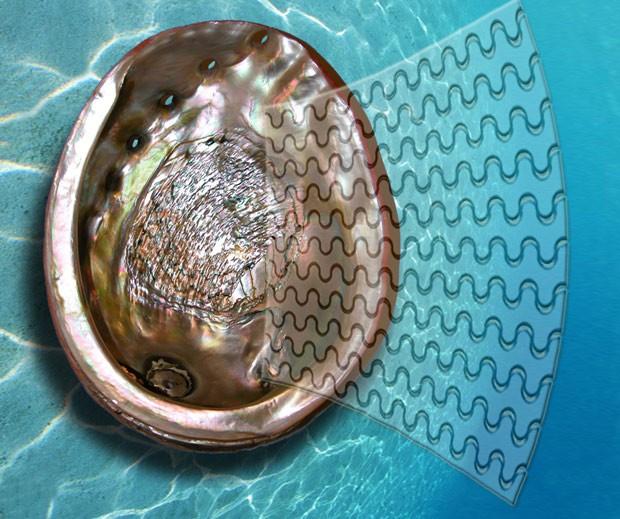 Apesar da fragilidade dos elementos que o constituem, conchas de moluscos são extremamente duras e fortes; um novo tipo de vidro foi inspirado nessa estrutura da natureza (Foto: F. Barthelat/Divulgação)