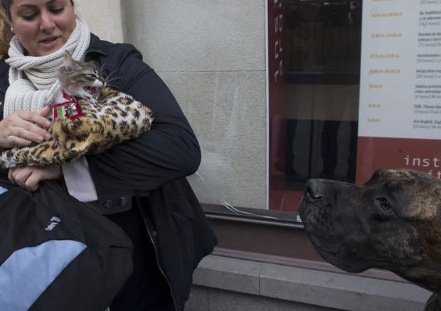 Seguro no colo da dona, gato 'valente' trocou encarada feroz com dogue alemão próximo a igreja em Madri, na Espanha (Foto: Paul White/AP)