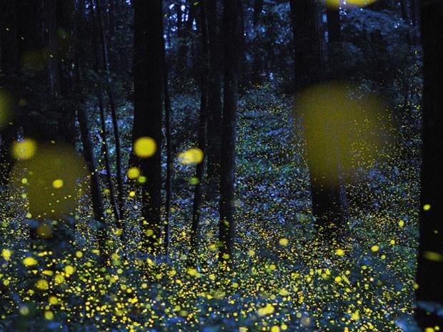 O fotógrafo Tsuneaki Hiramatsu combinou fotos feitas com o obturador em baixa velocidade para produzir imagens incríveis do brilho de vaga-lumes. A imagem acima foi feita em Okayama, Japão (Foto: BBC)