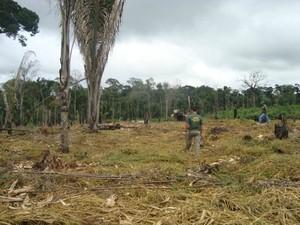 Operação identificou mais de três mil hectares de terras desmatadas ilegalmente, em RO (Foto: Batalhão de Polícia Ambiental/Divulgação)