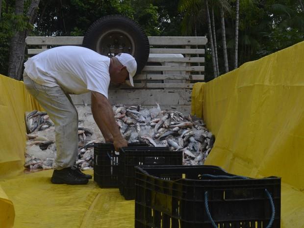 Peixe será doado para instituições de caridade no Amapá (Foto: John Pacheco/G1)