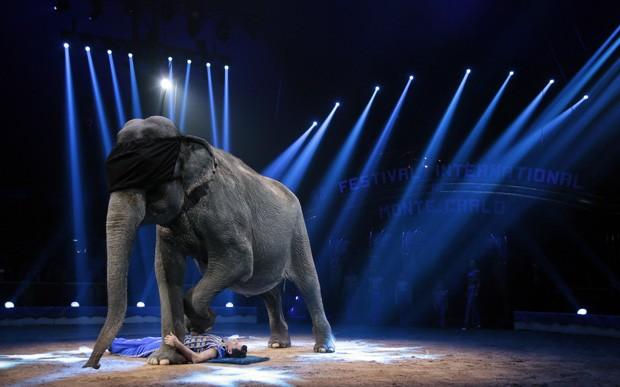 Durante número, elefante chegou a ficar vendado ao andar sobre o treinador (Foto: Eric Gaillard/Reuters)