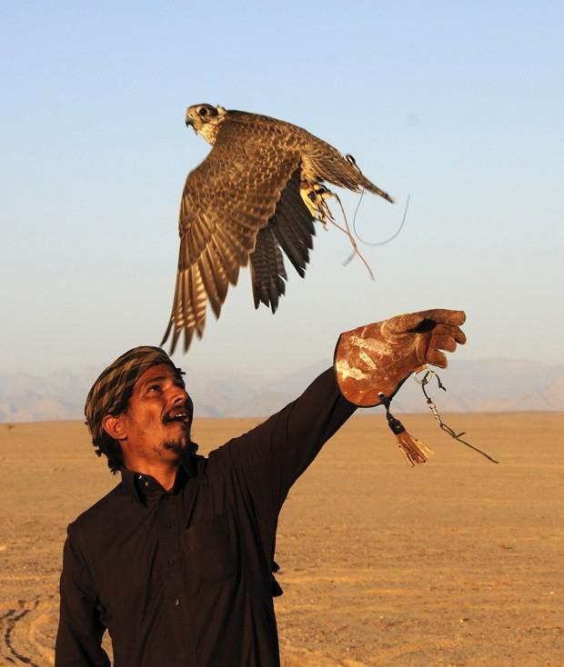 Saudita libera ave para a caça durante campeonato de falcões (Foto: Mohamed Al Hwaity/Reuters)