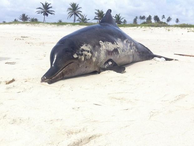 Golfinho estava com uma das nadadeiras cortadas. (Foto: Fabiana De Mutiis/G1)