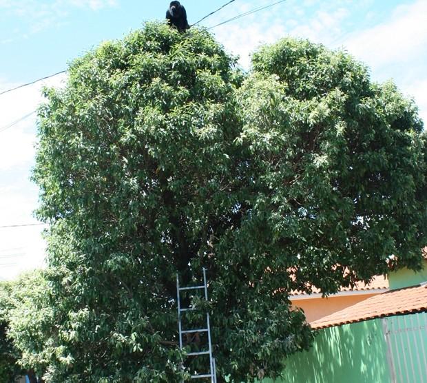 Animal foi retirado da árvore pela Polícia Ambiental (Foto: Osmar Ferraz / Jornal A Imprensa)