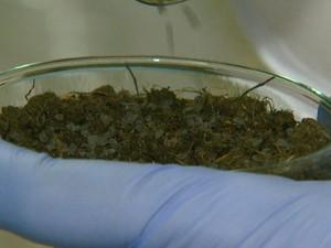 Lodo foi misturado ao solo em pesquisa feita pela Unesp de Rio Claro (Foto: César Fontenele/EPTV)