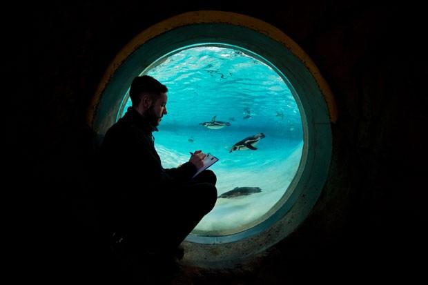 Funcionário do zoo de Londres observa animais aquário da instituição, durante tradicional censo anual (Foto: Leon Neal/AFP)