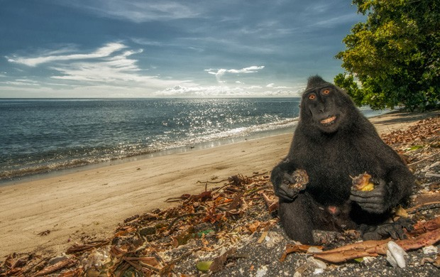 Macaco parece sorrir para a câmera e faz pose de 'minhas férias' em clique em Celebes do Norte, na Indonésia (Foto: Simone Sbaraglia/Caters News)