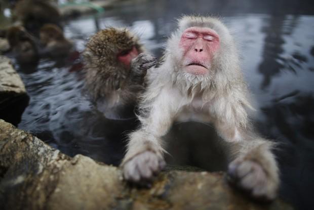 Macaco-japonês fechou os olhos para 'relaxar' enquanto 'amigo' mexia em seu pelo em fonte termal na cidade de Yamanouchi, no Japão (Foto: Issei Kato/Reuters)