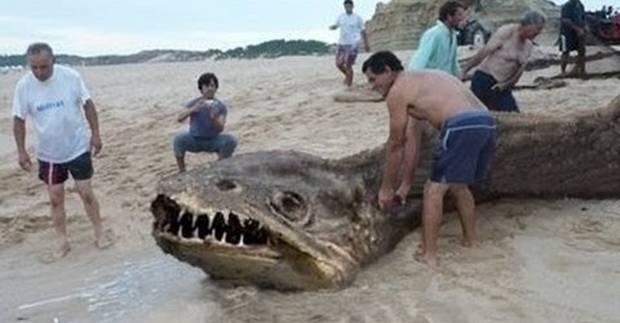 Monstro gigante teria sido encontrado morto em Sergipe! Verdadeiro ou falso? (foto: Reprodução/Facebook)