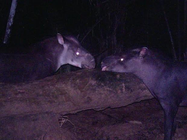 A nova espécie foi reconhecida oficialmente em 2013, mas estudos eram realizados há mais de 10 anos. (Foto: Suzi Rocha/G1)