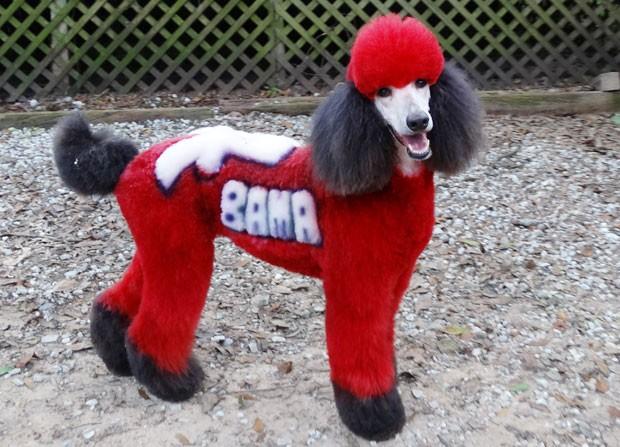 Cadela poodle 'Oona', de 4 anos, foi pintada em homenagem a time de futebol americano de Alabama (Foto: Amy Brown/NAPCG/AP)