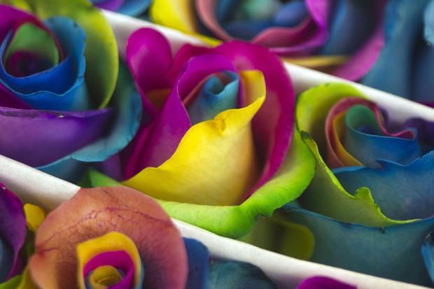 Entre as flores criadas na plantação, há uma versão de rosas 'supercoloridas' (Foto: Guillermo Granja/Reuters)