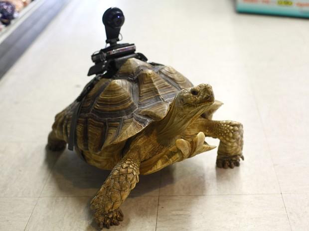 Tartaruga de 17 anos tem webcam instalada no casco (Foto: Joshua Lott/The New York Times)