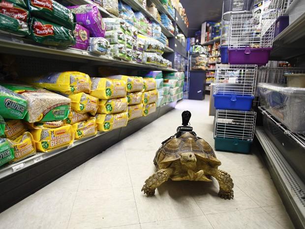 Câmera instalada no casco de Franky transmite vida de animal pela internet (Foto: Joshua Lott/The New York Times)