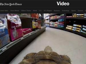 Câmera transmite vida de Franky na internet (Foto: Reprodução/The New York Times)