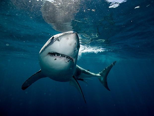 Exemplar de tubarão-elefante foi fotografado por serviço americano em novembro de 2011 (Foto: Divulgação/NOAA)