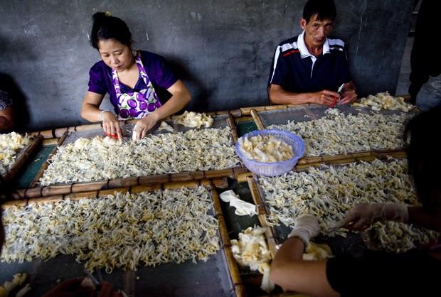 Chineses trabalham com barbatana de tubarão em fábrica (Foto: CHINA OUT/AFP Photo)