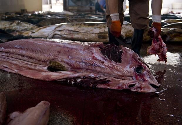 Trabalhador retira pele de tubarão em abatedouro encontrado por grupo ambientalista (Foto: CHINA OUT/AFP Photo)
