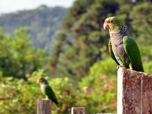 Aves soltas visitam moradores da região (Foto: Vanessa Kanaan/Espaço Silvestre)