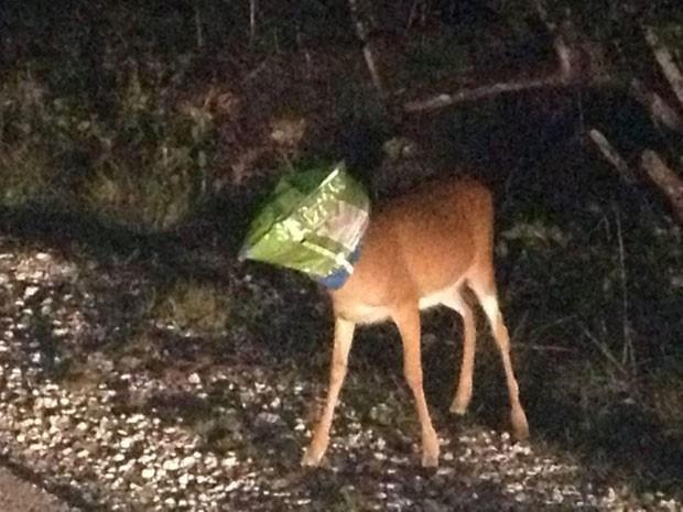 Veado foi salvo após entalar a cabeça em pacote de salgadinho (Foto: Monroe County Sheriff's Office/AP)
