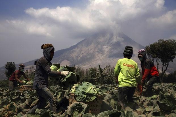 Trabalhadores colhem alface de plantação perto do vulcão Sinabung, na Indonésia, nesta quarta-feira (5) (Foto: Beawiharta/Reuters)