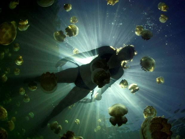 Lago Jellyfish fica em Palau, no Oceano Pacífico (Foto: BBC)