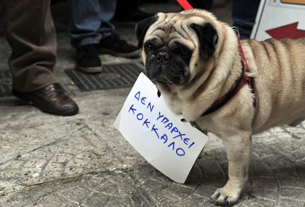 Cão 'protestou' nas ruas de Atenas com placa 'não há mais ossos' (Foto: Louisa Gouliamaki/AFP)