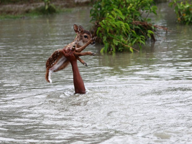 Garoto atravessa cervo por águas agitadas, ficando com a cabeça encoberta (Foto: Caters News/The Grosby Group)