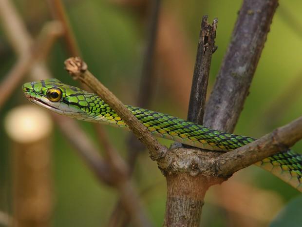 Cobra foi devolvida à natureza (Foto: Patrick Mota/Rádio Amazonas FM)