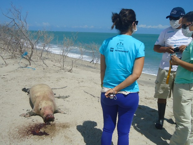 Um filhote de peixe-boi marinho foi encontrado na praia de Barra Grande, no Piauí (Foto: Projeto Biomade patrocínio Petrobras)