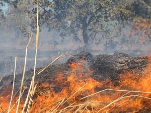 Governo do Tocantins decreta situação de emergência por causa dos focos de queimadas (Foto: Elisangela Farias/G1 TO)
